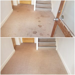 carpet cleaners near me Doncaster