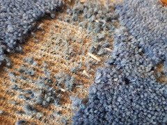 Wool carpet cleaning in Doncaster